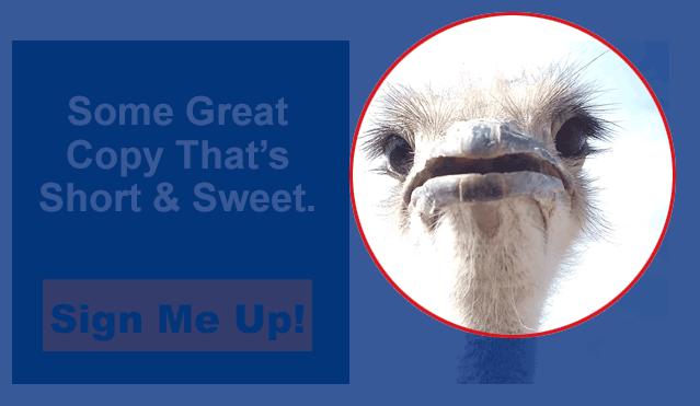 A Cute Ostrich